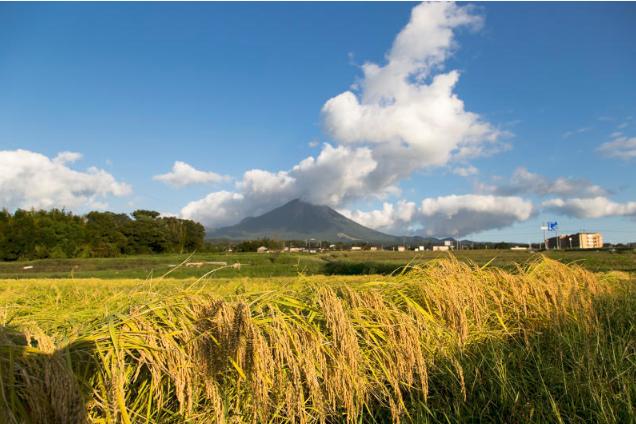 Japanese sake rice fields in front of Mount Daisen, Tottori Prefecture