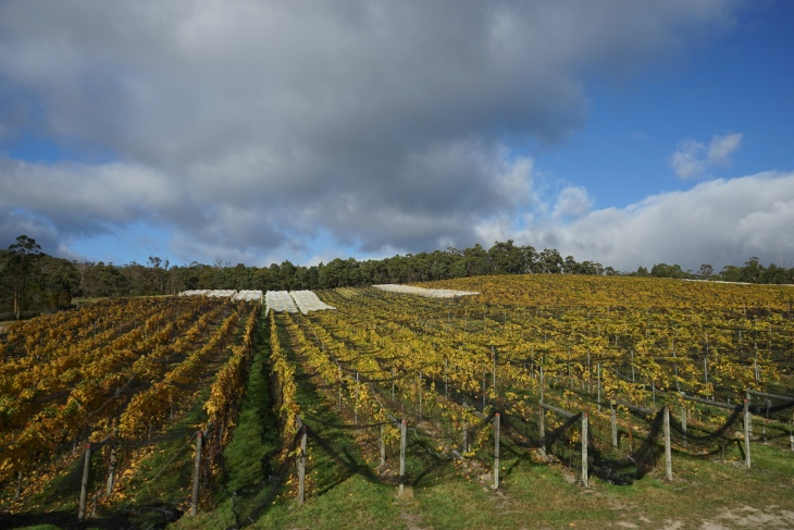 Sailor Seeks Horse Vineyard, Huon Valley Tasmania